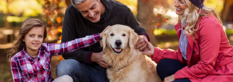 Pet Insurance - Protect Your Pets Today Bradford